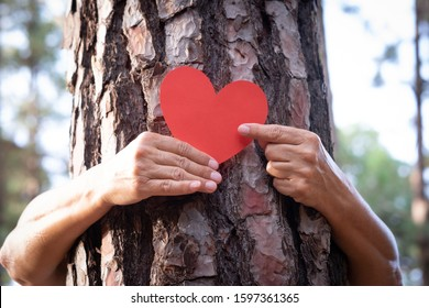 Watch me. I'm the heart of this plant. Two woman hands hugging a tree trunk and holding a red heart made of paper - love for outdoors and nature - earth's day concept.