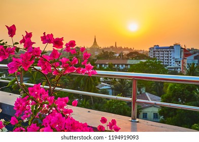 Watch the sunset over the Singuttara Hill with a silhouette of golden Shwedagon Zedi Daw with blooming bouganivillea bush on the foreground, Yangon, Myanmar.