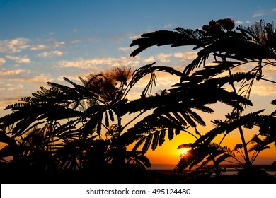 Watch the sunset through the plant