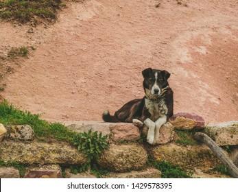 Watchdog mongrel dog lies on a stone curb.