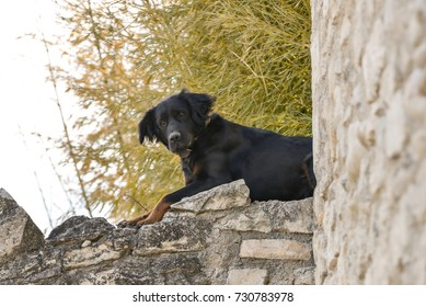 a watchdog on the wall