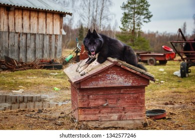Watchdog yawning on the booth. Poor russian village / country scenery