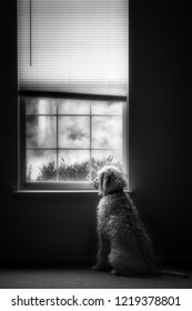 A watchful dog looking out a window waiting something or someone.