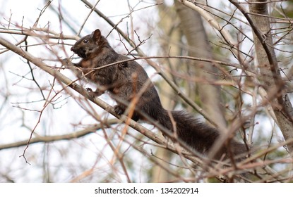 Watchful squirrel on a branch