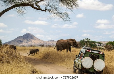 Watching Elephants on Safari