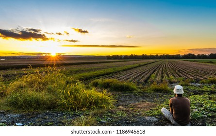 Watching the sunset in late summer over farmlands in the black dirt region of Pine Island, New York