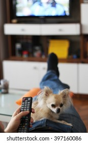 Watching tv with a small chihuahua dog laying comfortably on a person's lap, focus on hand
