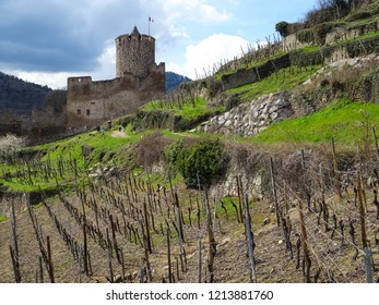 watchtower of ruined Castle of Kaysersberg surrounded by vineyards, Alsace, France, beginning of spring