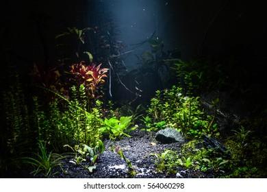 Water aqarium