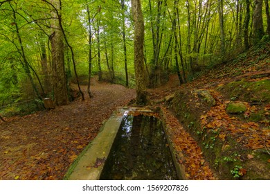 Water basin in an autumn forest