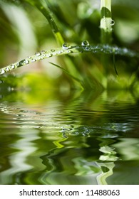 Water Beads on Blade of Grass Reflecting in Water