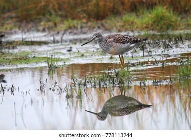 Water bird, Alaska