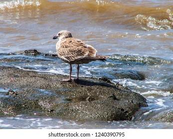 Water bird at beach