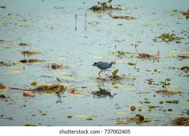 Water bird and ecology in wetland.