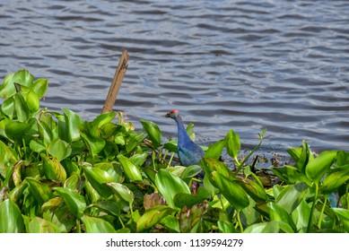 Water bird on Spat
