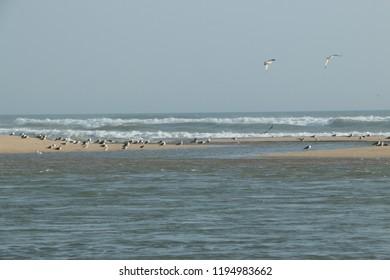 water bird wallpepar