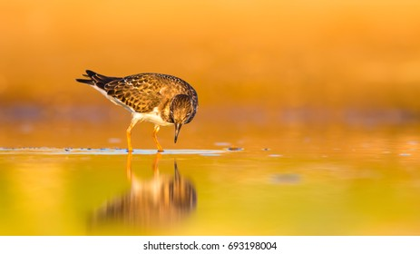 Water bird. Warm colors nature background.