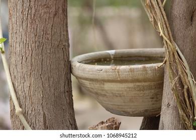 water for birds in pot