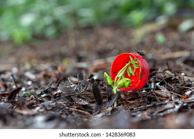 Water Bottle cap on Ground  withTree seedlings