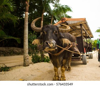 water buffalo cart - Taketomi island, Okinawa, Japan - Shutterstock ID 576433549
