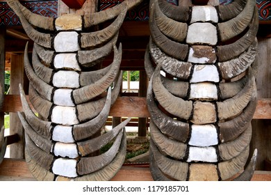 Water buffalo horns on a Tongkonan, a traditional Toraja house with a massive peaked-roof, in Toraja, Sulawesi, Indonesia