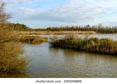 water, bushes and reeds  landscape of lagoon, shot in bright spring sun light at nature oasis, Cannavie, Volano, Ferrara,  Italy