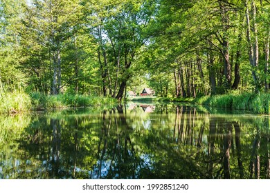 Water canal with beautiful water reflection in the biosphere reserve Spree forest (Spreewald) in the state of Brandenburg, Germany