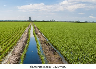 Water canal for paddy rice field irrigation.