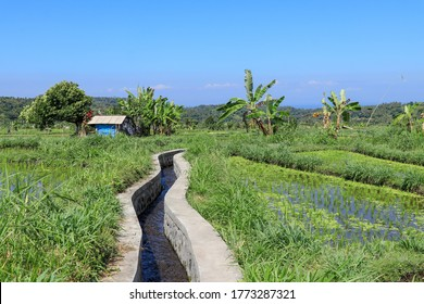 Water canal for paddy rice field irrigation