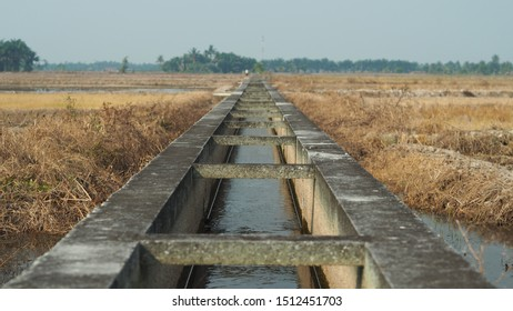 Water canal is use to provide adequate water supplies in the paddy field
