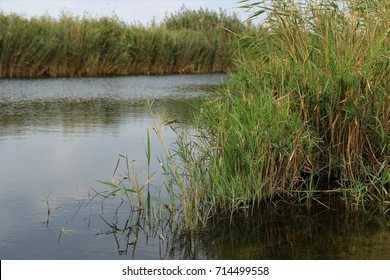 water canals with reeds