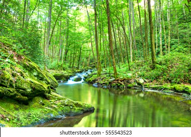 Water cascades over boulders covered in green moss. Smoky Mountains National Park.