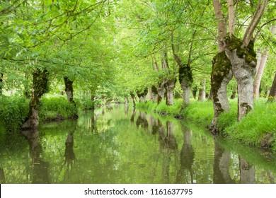 Water channel in marais poitevin