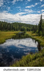 Water creek in Talkeetna, Alaska on a bright summer day