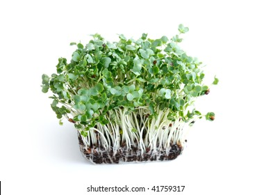 Water cress on a background