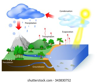 Water cycle images stock photos vectors shutterstock water cycle diagram the sun which drives the water cycle heats water in ccuart Choice Image