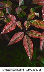 Water Defrosting on Wild Red and Green Leaves