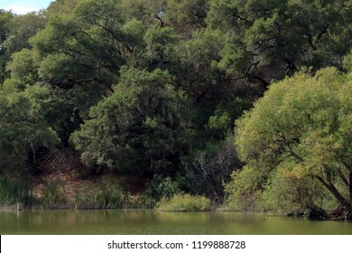 Water Dog Lake Park and Open Space in Belmont, California