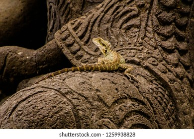 water dragon resting on a buddah statue