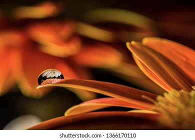 A water drop on a flower's petal