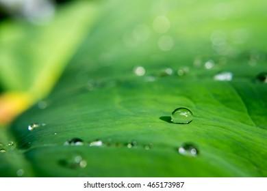Water drop on green leaves