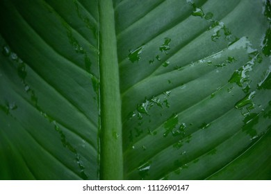 Water drop on green palm leaf