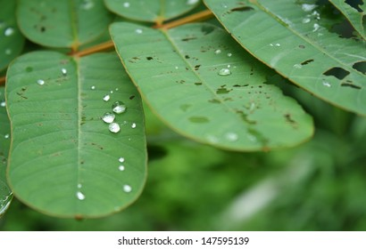 water drop on herbal leaf after raining (by normal lens)