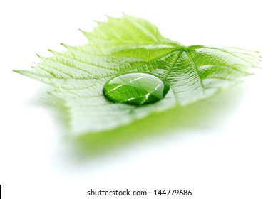 Water drop on leaf isolated on white background macro
