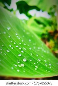 water drop on leaf photo