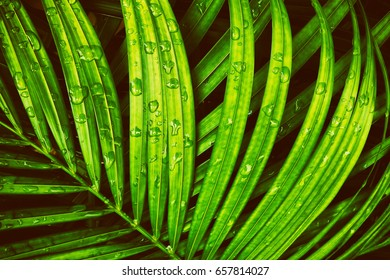 water drop on tropical palm foliage, dark green background