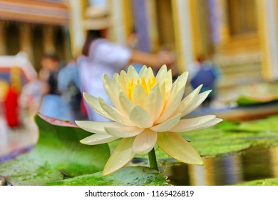 the water drop with yellow lotus petel