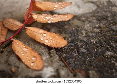 Water Droplets on Atumn Leaf