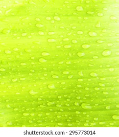 Water droplets on banana leaves