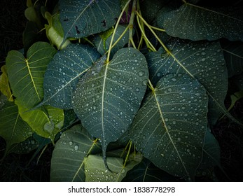 Water droplets on a bunch of leaves